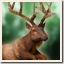 Elk on the loose Achievement